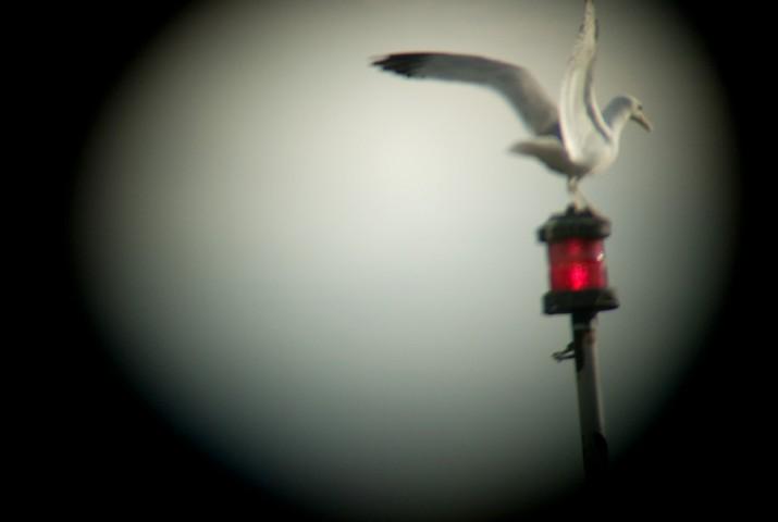 Ortakoy: seagull